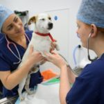 Dog immunotherapy
